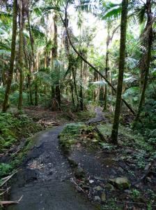 El Yungue Rain Forest, Puerto Rico